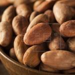 Catalogan 159 tipos de cacao en Nicaragua, 13 de ellos de variedad fina