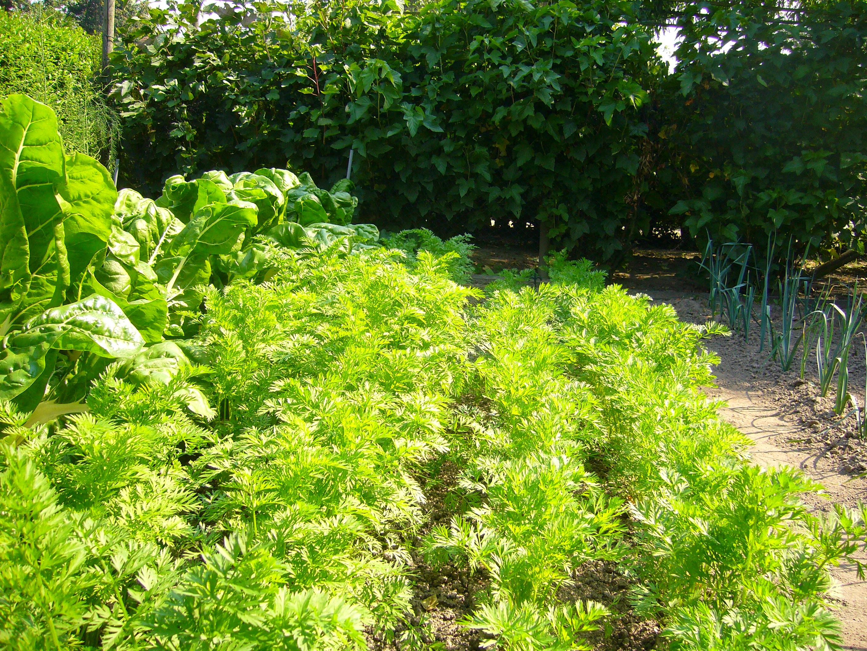 Organic vegetable gardens (Vegetable Garden Guide ... on Gardening  id=58561