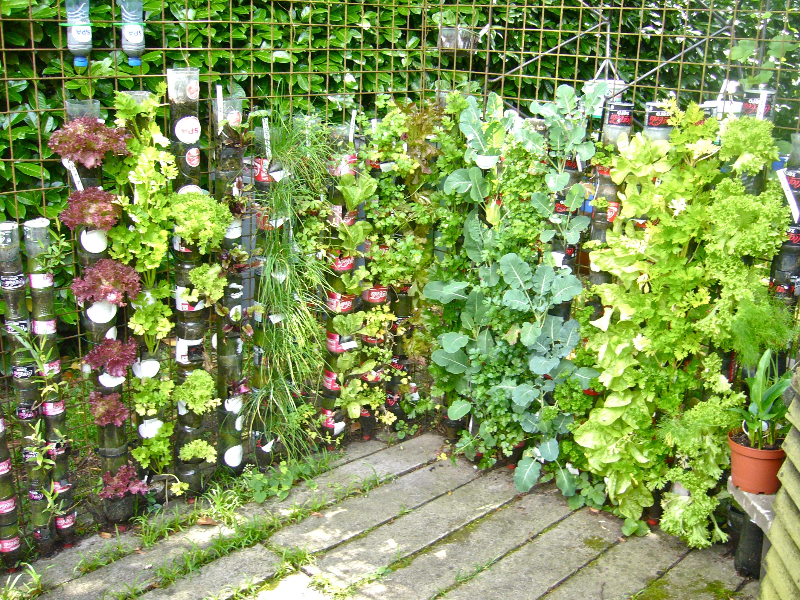 bottle gardens - CONTAINER GARDENING on Gardening  id=23270