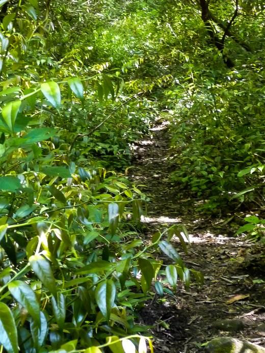 Doghobble Trail