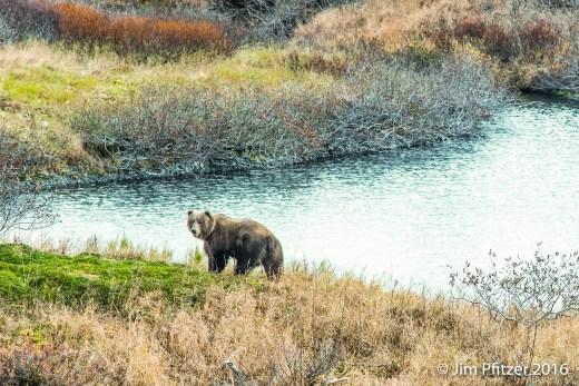 Big Brown Bear-4.jpg