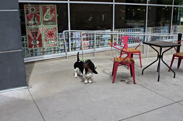 dog visits bookstore