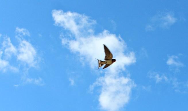 fly fly fly fly