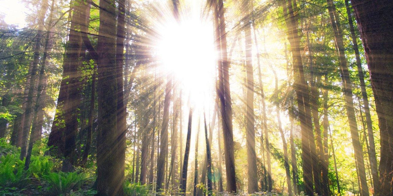 A Checklist for Resurrection