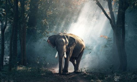 The Mystique of Thomas Merton and the Elephant in the Silence