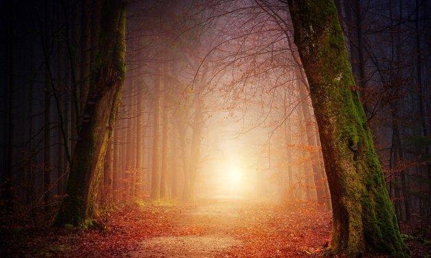 The Contemplative Path
