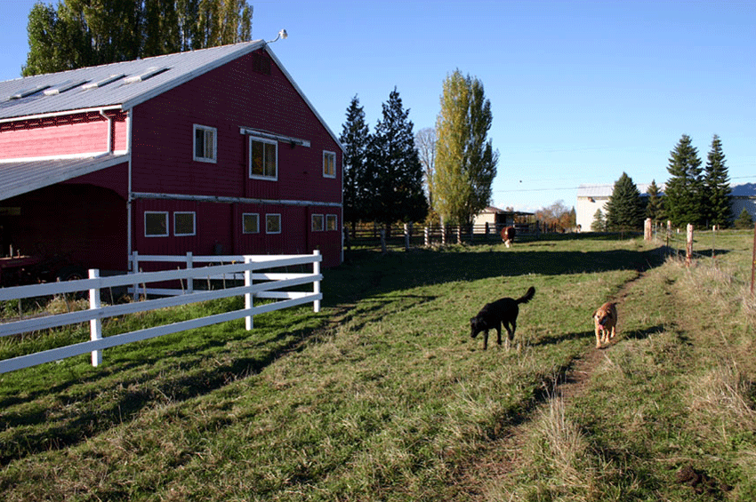 Ed Bereal's farm in Bellham, Washington. Image courtesy of the artist.
