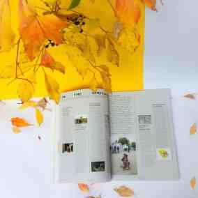 Contemporary Lynx magazine 2(8)2017