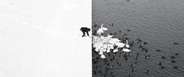 Marcin Ryczek, A Man Feeding Swans in the Snow, © Marcin Ryczek