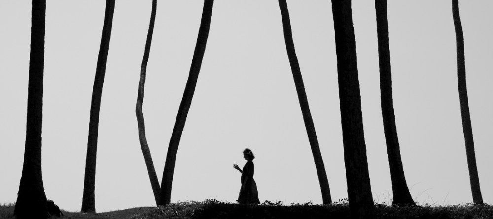 Marcin Ryczek, Forest © Marcin Ryczek