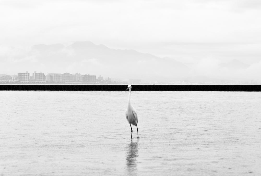 Marcin Ryczek, Hiroshima, Phoenix Rising From The Ashes © Marcin Ryczek