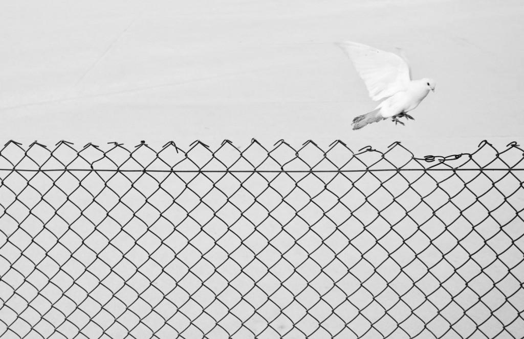 Marcin ryczek, Liberation, © Marcin Ryczek