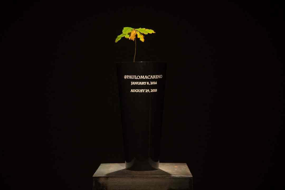 Piotr Krzymowski, @paulomacareno, bio-urn with cremated photographs published by @paulomacareno, 15 x 50 cm, 2019, Homo cellularis exhibition, Toruń, 2019, photo by Dawid Paweł Lewandowski