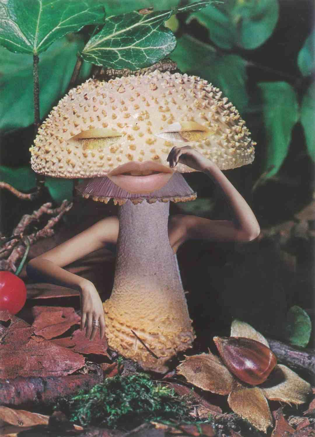 Seana Gavin, 'Mindful Mushroom', courtesy of the artist