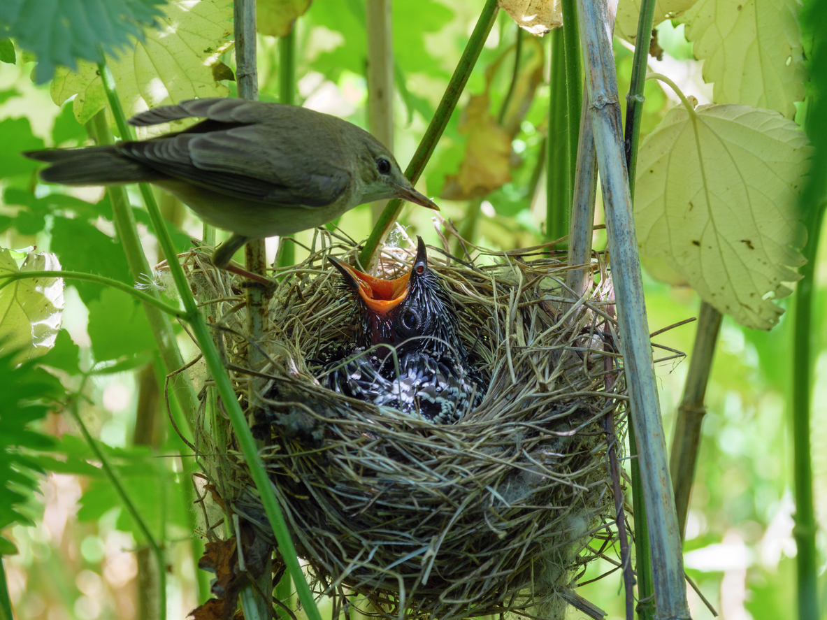 AWS Outposts – A Cuckoo in the Enterprise Nest?