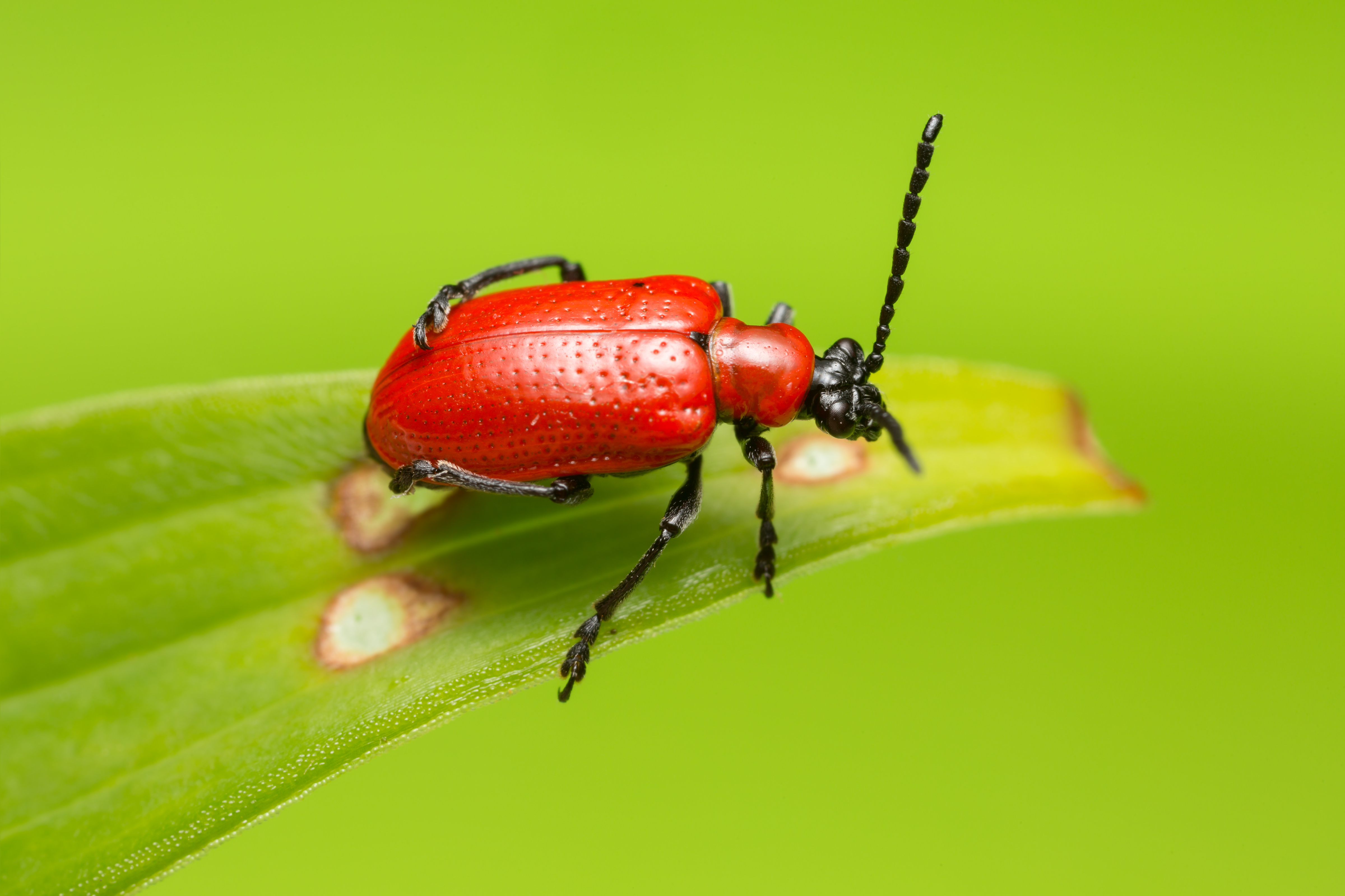 5 Insects That Could Be Good News For Your Garden