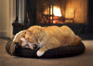 dog and cat sleeping by fireplace