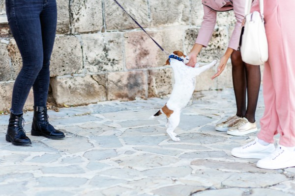 How having a pet can change your life walking the dog