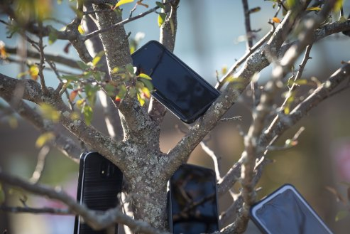 The bizarre reason Amazon drivers are hanging phones in trees near Whole Foods | Fortune