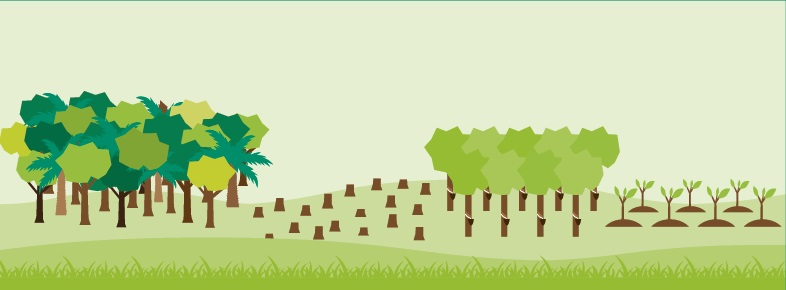 global forest watch (gfw) is an online platform that provides data and tools for monitoring forests. Forest Global Forest Watch Blog