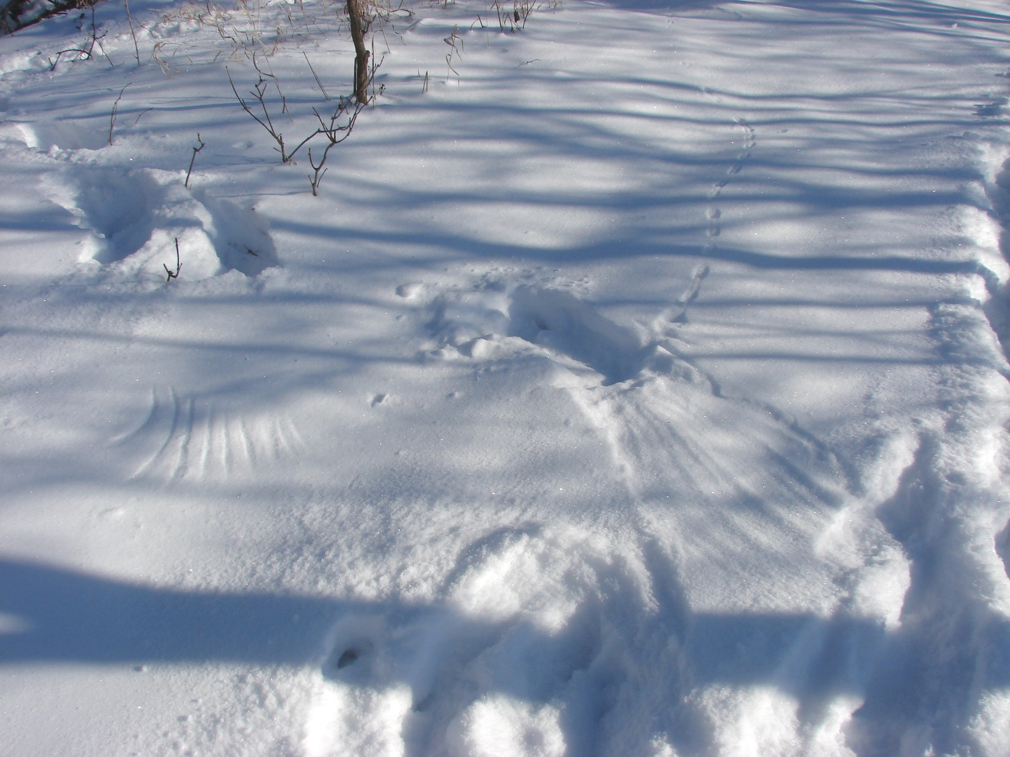 Tracking Wildlife Is A Fun Educational Winter Activity