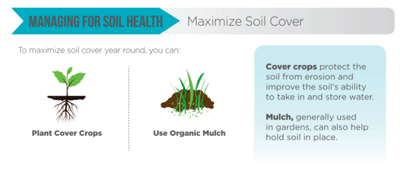 Soil Health Infographic - Maximize Soil Cover