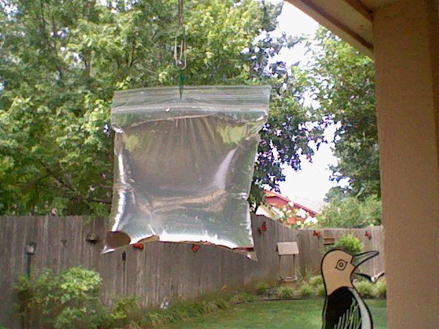 keep pesky flies away from your bbq