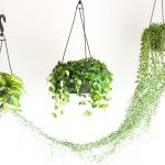 How To Hang A Plant From The Ceiling 5 Steps With Pictures Instructables