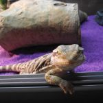 Bearded Dragon Vivarium 5 Steps Instructables