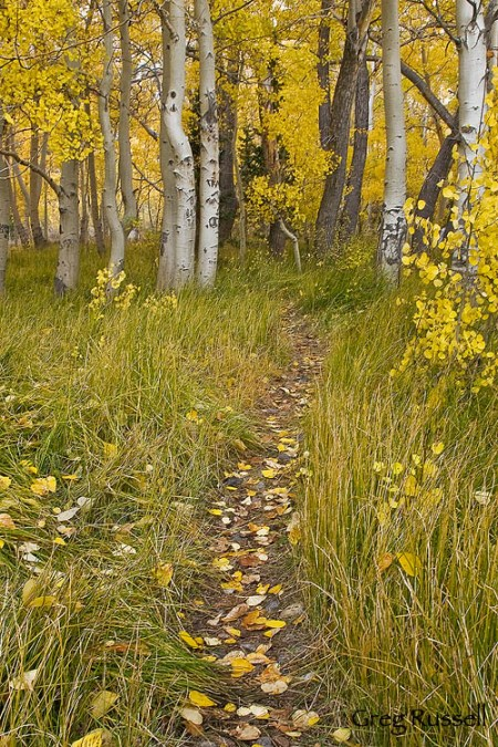 A path into thin air: let the landscape guide you toward compositions