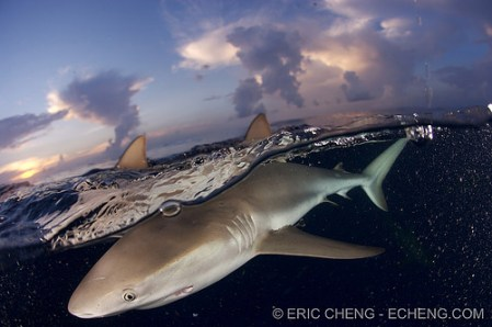 What lies beneath the waves – underwater photos by Eric Cheng