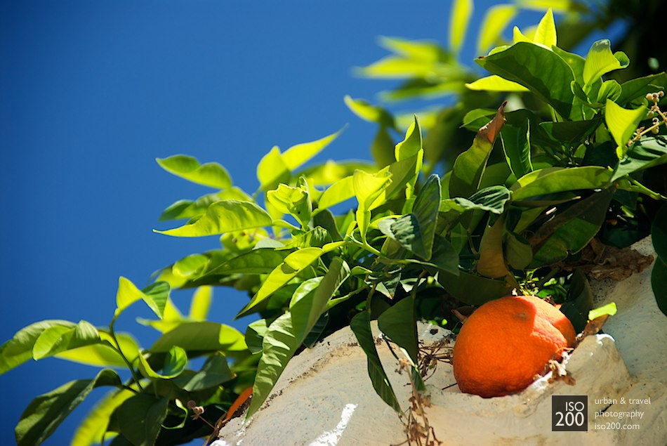A fresh orange snuggled in the shadows against a wall in the Albaicin area of Granada, Spain.