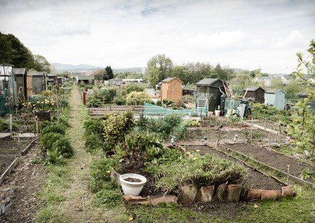 ALLOTMENTS » Lesley  Gracie