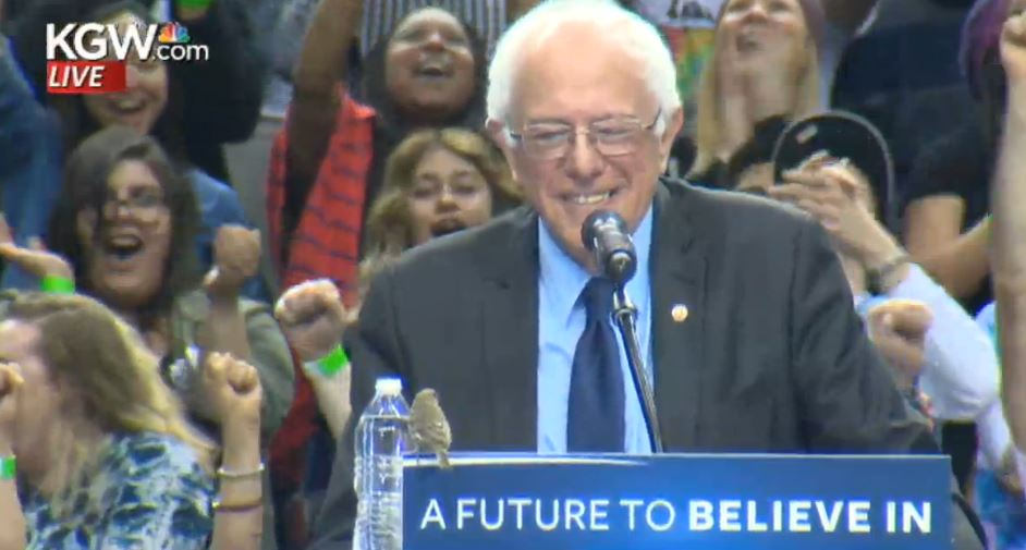 Image result for Bernie and the little bird