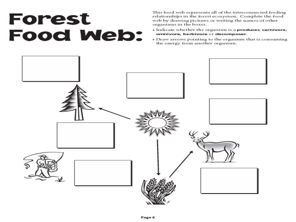Food Web Worksheet With Questions