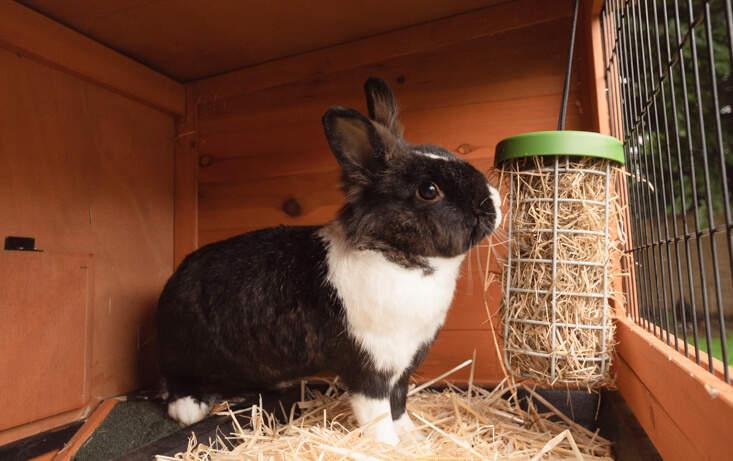 caddi rabbit treat holder omlet