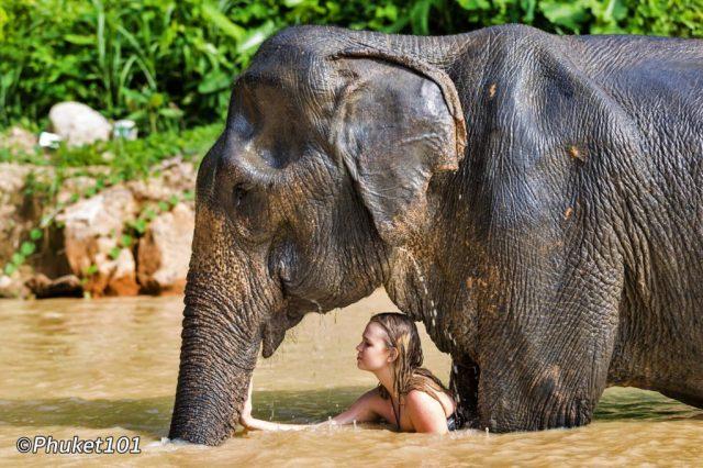 Phuker Elephant Sanctuary