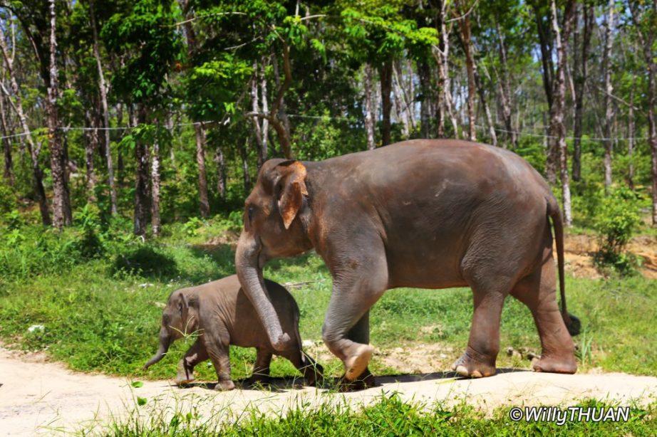 Elephant Sanctuaries of Phuket