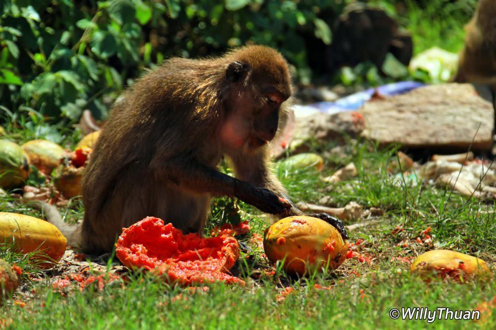 Monkeys in Phuket