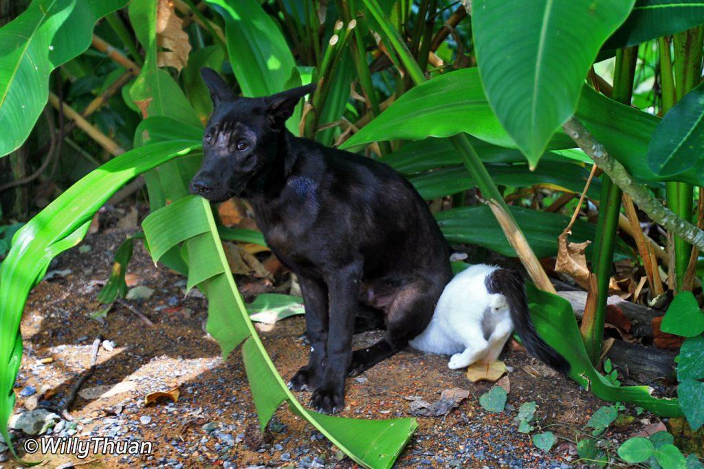 Phuket Funny Photos