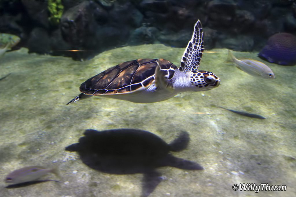 Phuket Aquarium at Cape Panwa
