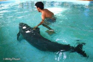 phuket-aquarium-dolphin