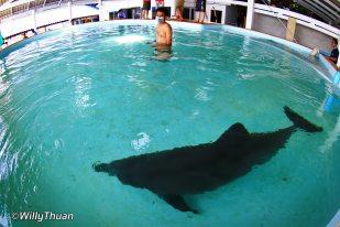phuket-aquarium-dolphin-1