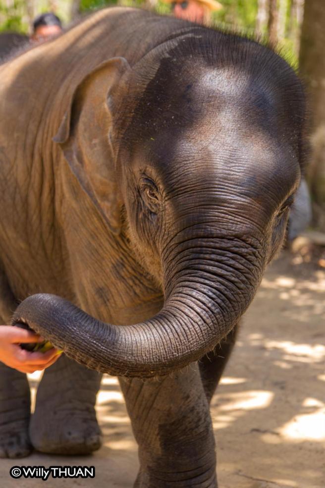 elephant-jungle-sanctuaries-211