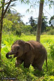 baby-elephant11