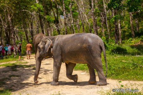 Phuket Jungle Elephant Sanctuary