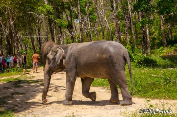 Phuket Jungle Elephant Sanctuary