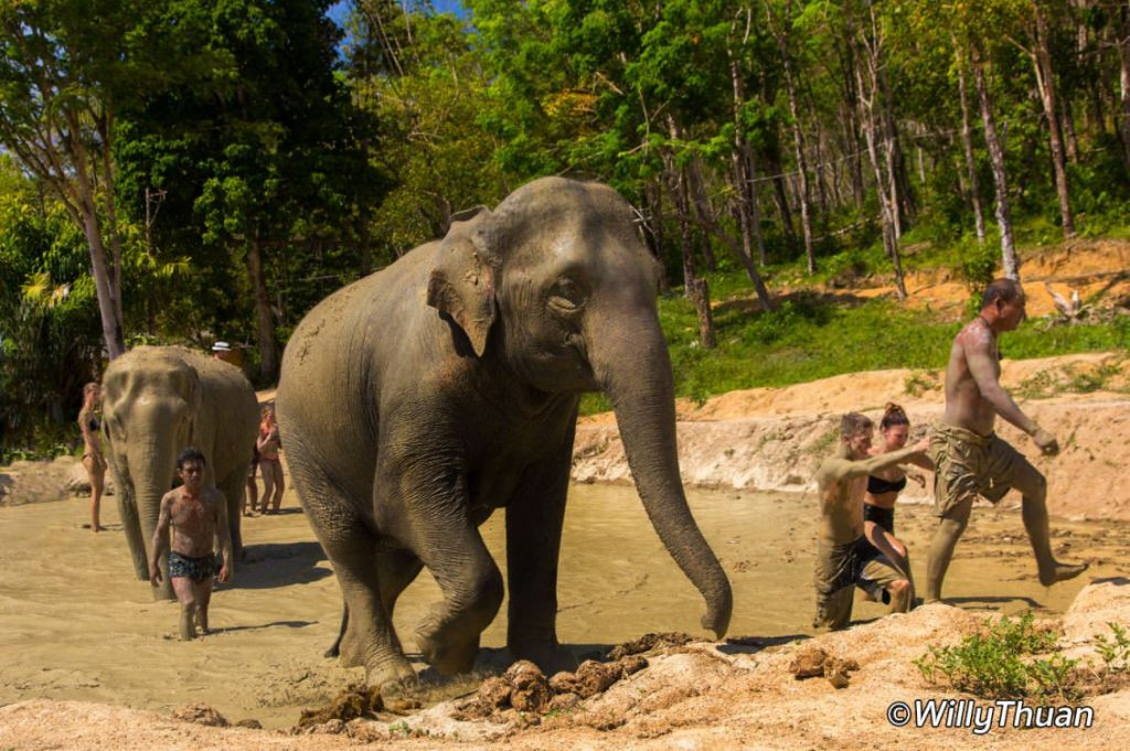Mud bath with elephants at Elephant Jungle Sanctuary Phuket