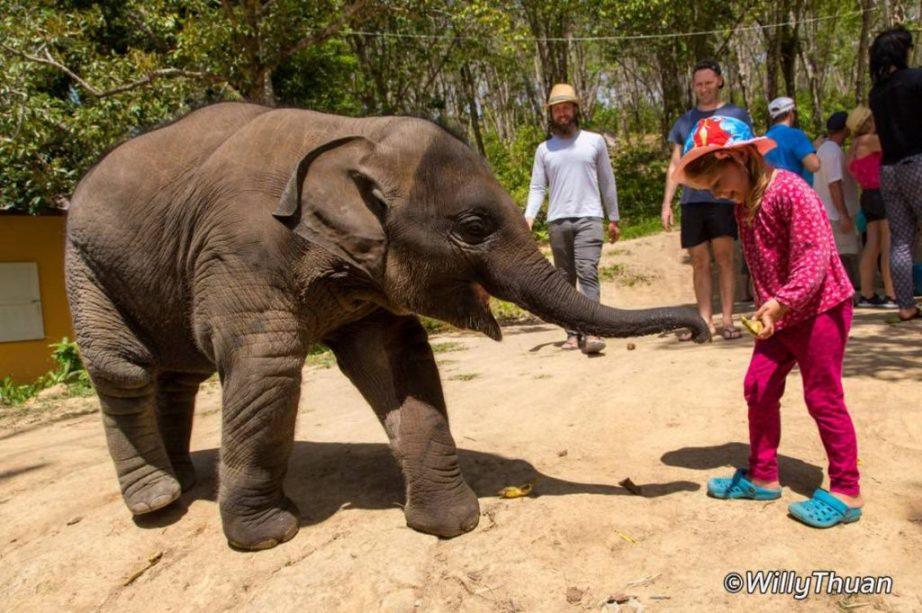 Baby Elephant at Jungle Sanctuary Phuket