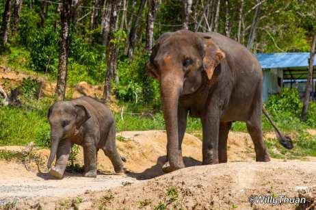 Elephant Jungle Sanctuary Phuket